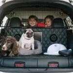 Nissan приспособил X-Trail для путешествий с собаками (видео)