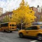 Почему снижение скорости в городах не панацея от травматизма пешеходов?