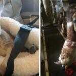 Самые странные животные, которые можно встретить на борту самолетов