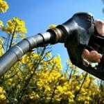 В Одесской области наладят производство биоэтанола