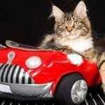 Самый беспечный кот-путешественник на свете: Видео