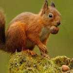 Владелица неожиданно обнаружила под капотом своей Kia Rio гору орехов: откуда они там?